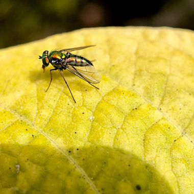 Fly on a leaf!