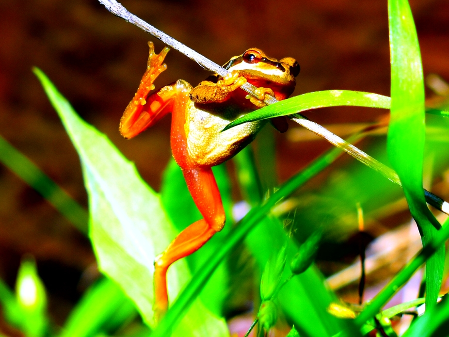 Frog jumped on grass stem