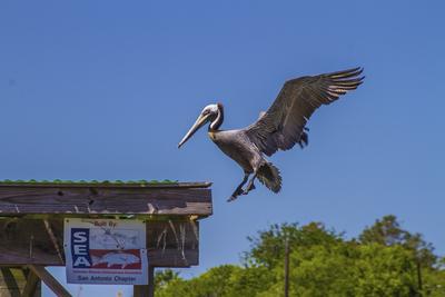 Pelican - End of flight