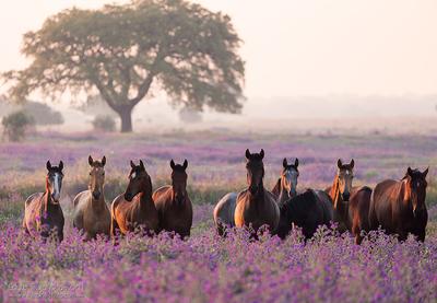 Fields of purpre