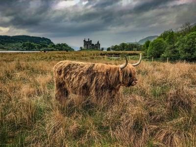 The Coo of Kilchurn Castle