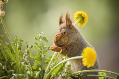 where did I put those nuts again