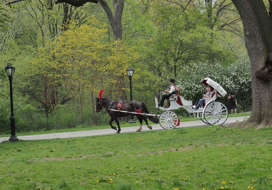 Romantic Spring in Central Park