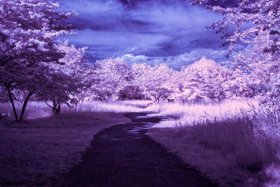 Infrared nature