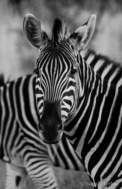 Striped Portrait