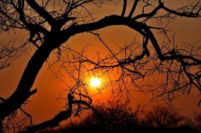 DSC_0207 Etosha Sunrise 1 Namibia 2016
