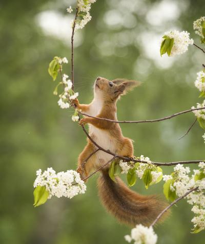 flower climb