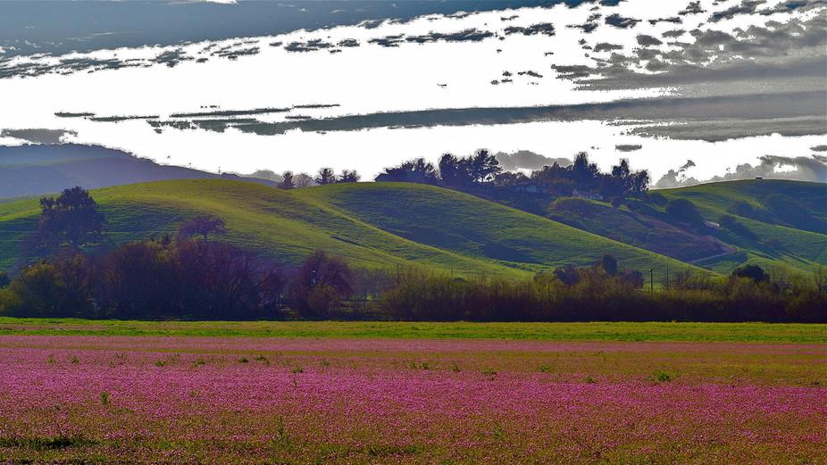 SPRING,  CALIFORNIA USA