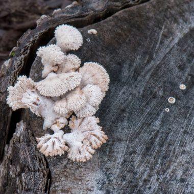 Fungus, Darnestown, MD 05/23/2018,DSC_1501