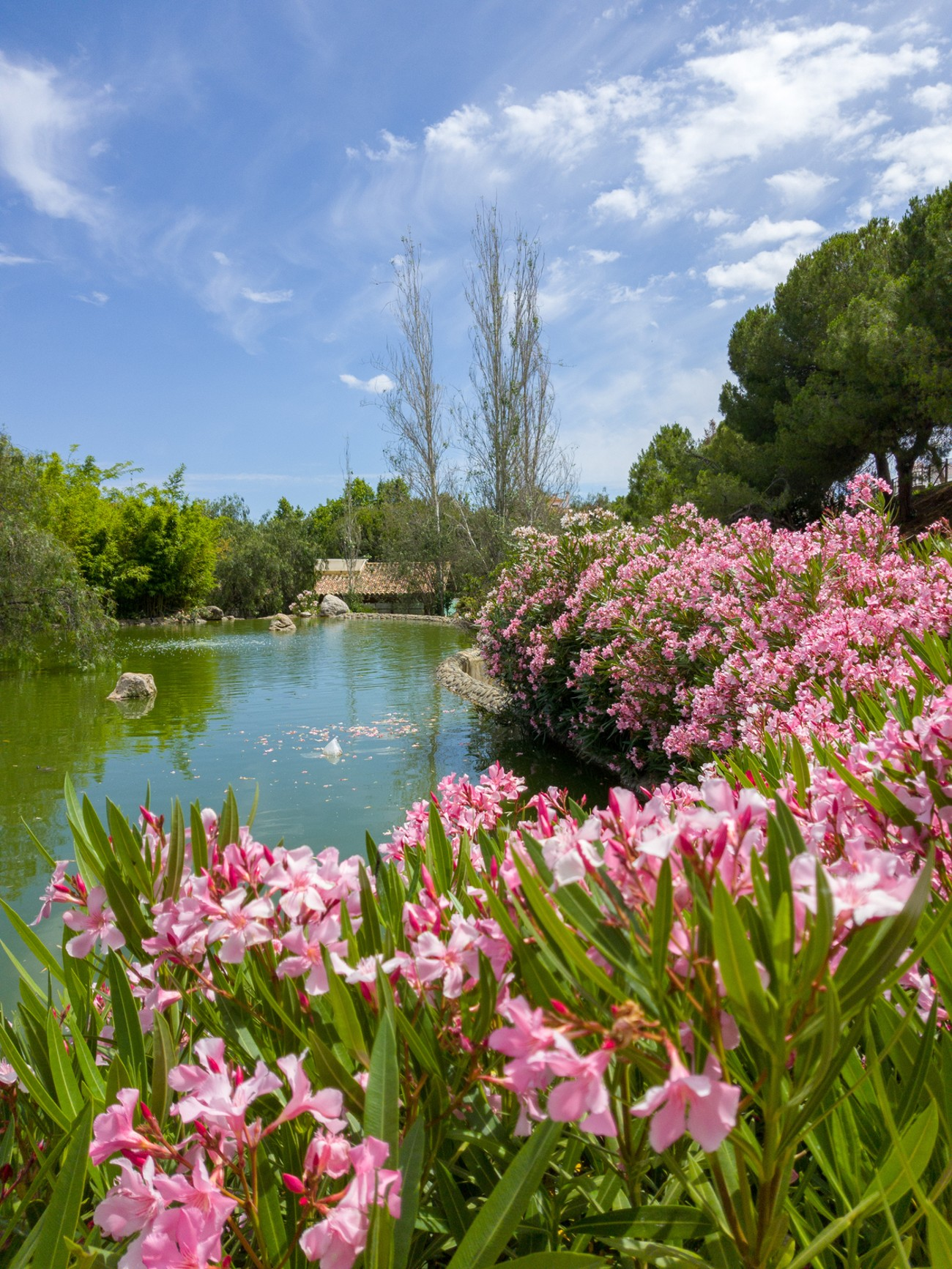 a summer floral view of my local park in Marbella, Spain