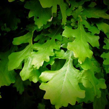 Here's a bunch of nice green leafs gasing back to Black