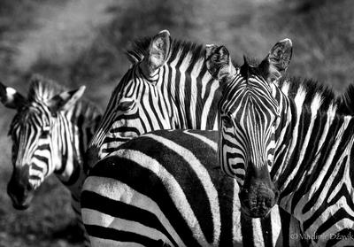 a world of stripes