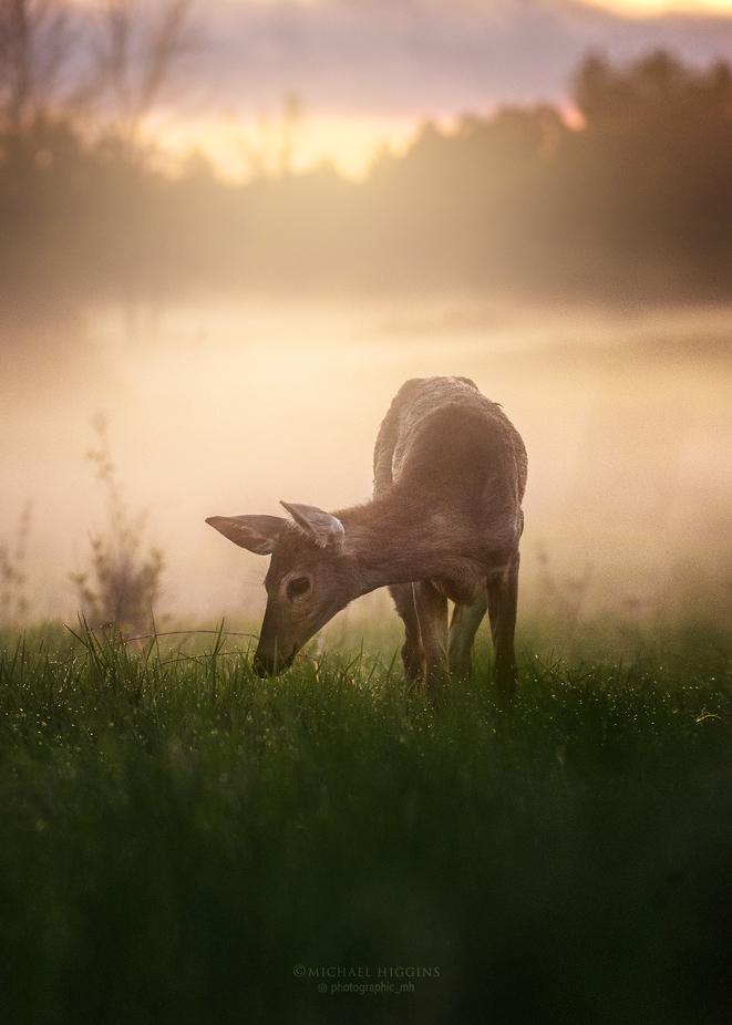 Dewy Graze by Michael_Higgins - Morning Dew Photo Contest