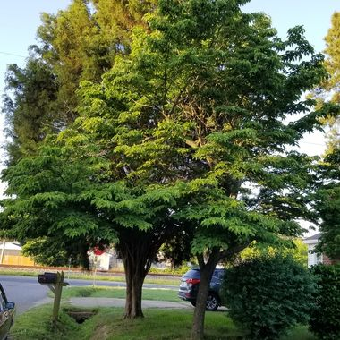 This tree is catching the Glow  Sun