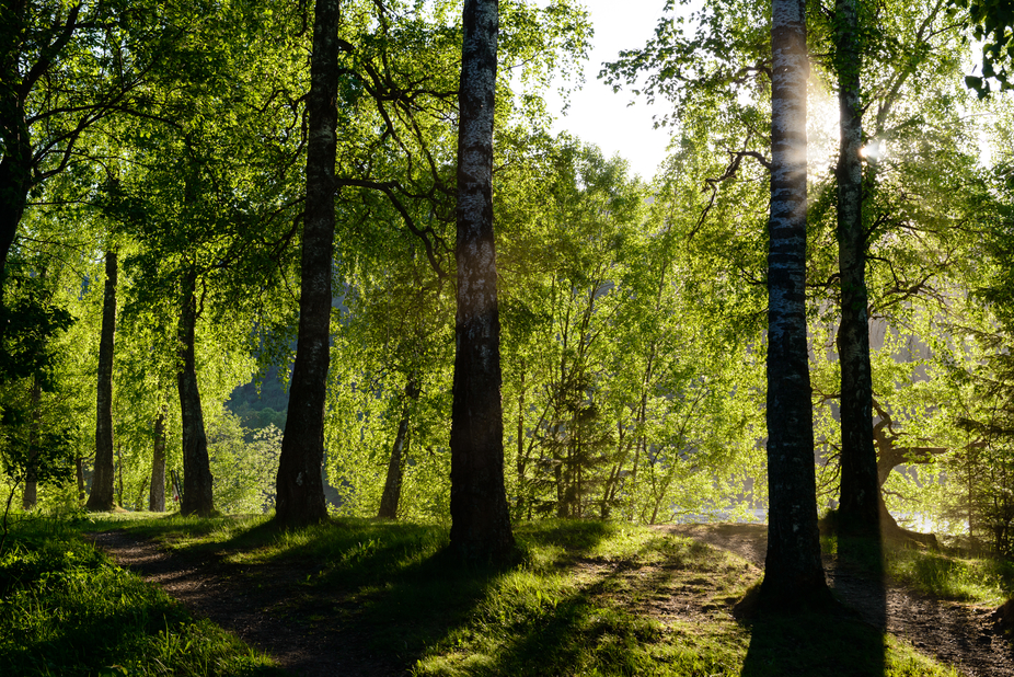 Late evening sunburst on a path through a backlit glade of trees beside the lake at Sem near Asker in early spring