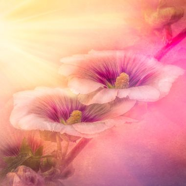 Pflower