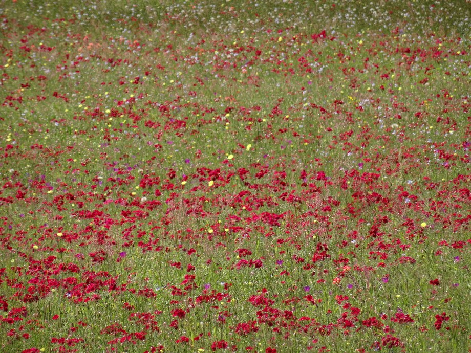 Near where I live, there are plenty of wildflowers for me to photograph.  I don't usuall...