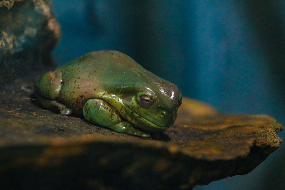 its a sleeping frog