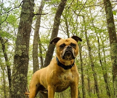Hiking Boxer