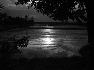 IMG_9163 Early morning sun on rice paddies