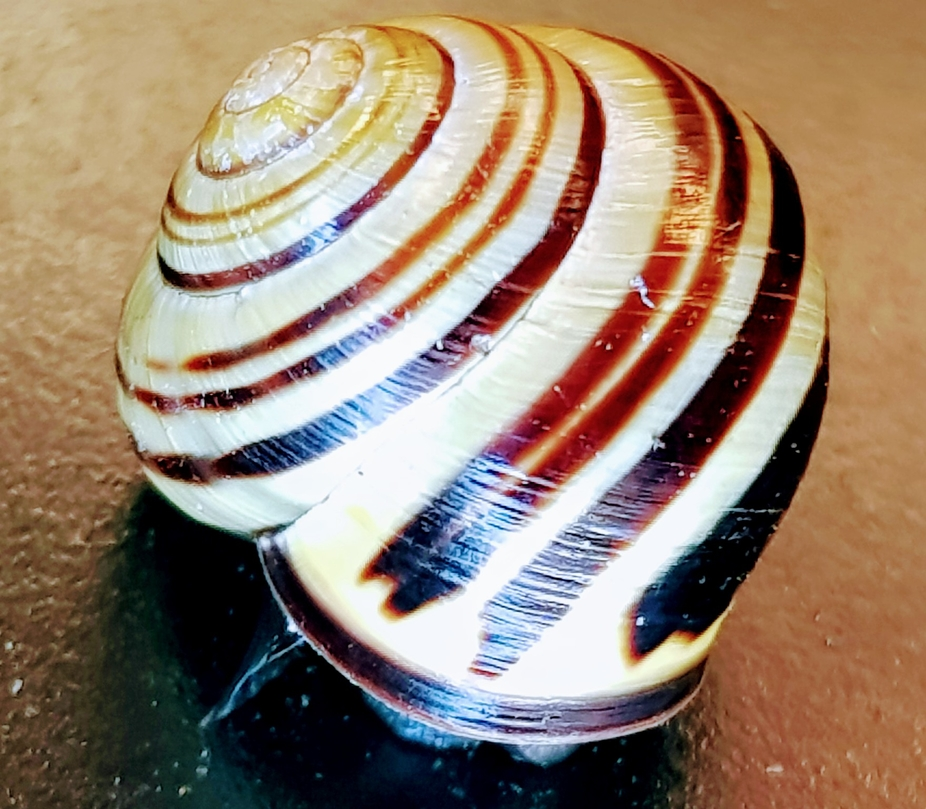 Nature snail shell