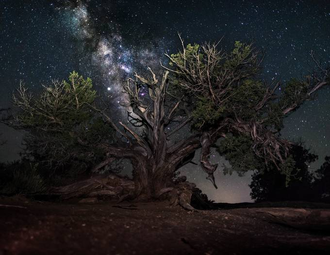 Tree of the Ages by Chris_Flick - Covers Photo Contest Vol 48