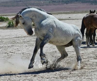 Wild Horses 7