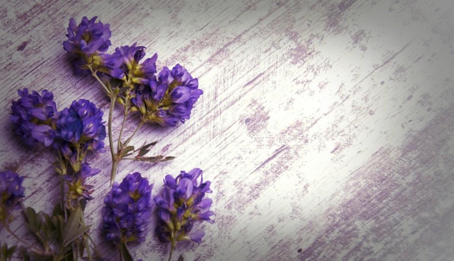 17-lilas flores