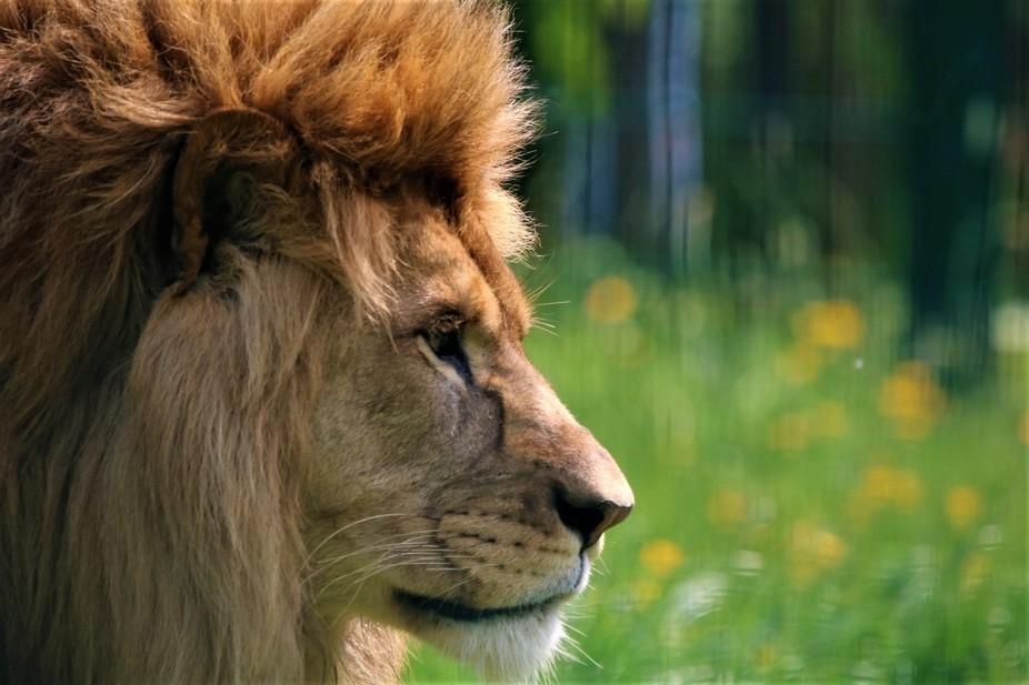 King of pride