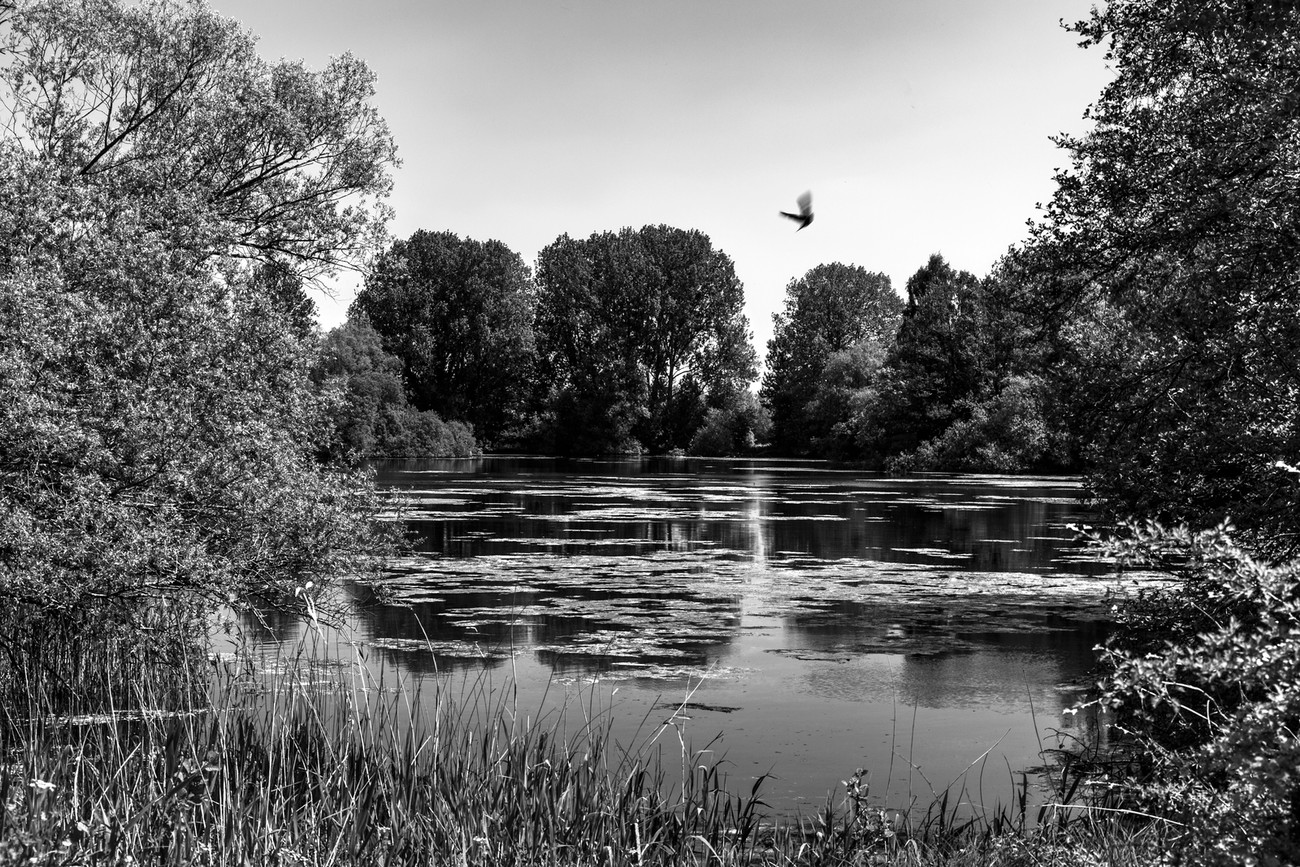 Langford middle lake in black and white