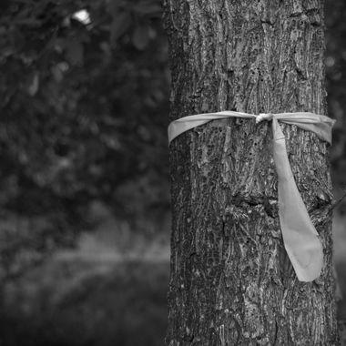 Ribbon tied around tree