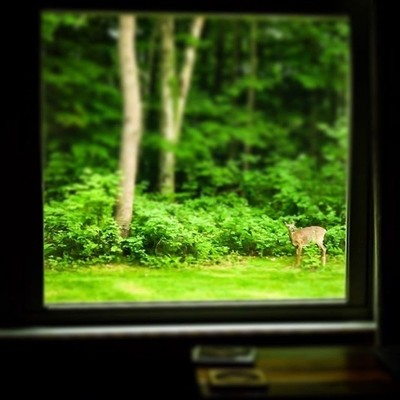 Living room view.  #trailsend #outthewindow #livingroomview #whitetaildeer #neighbors #canon_photos #canon_photos #canonwhatelse #got_greatshots #marvelouz_world #fotocatchers #ethereal_moods #ig_eternity #bd_pro #ourplanetdaily #earthfocus #naturyst #pho