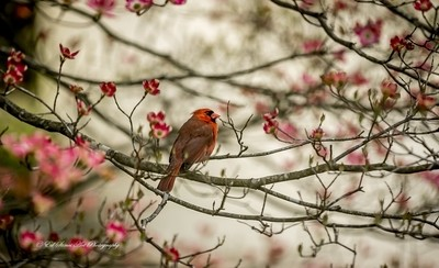 Red on Red Springtime
