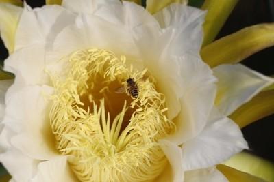 Flower and pollinators