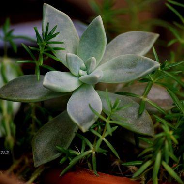 Homegrown Succulents