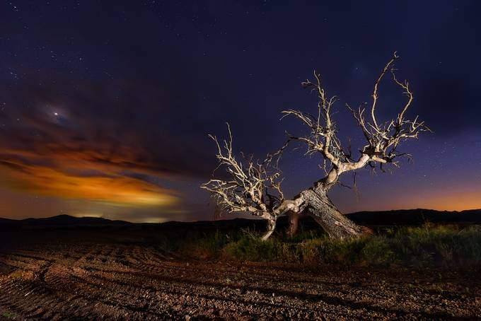 Dead tree by Gondyc - The Natural Planet Photo Contest