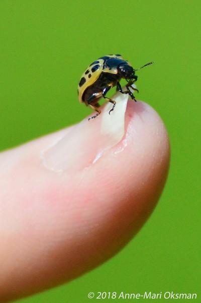 A bug on my finger tip