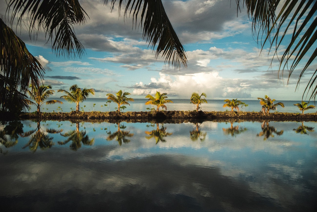 New coconut trees emerging in a stunning resort on Samoa islands.