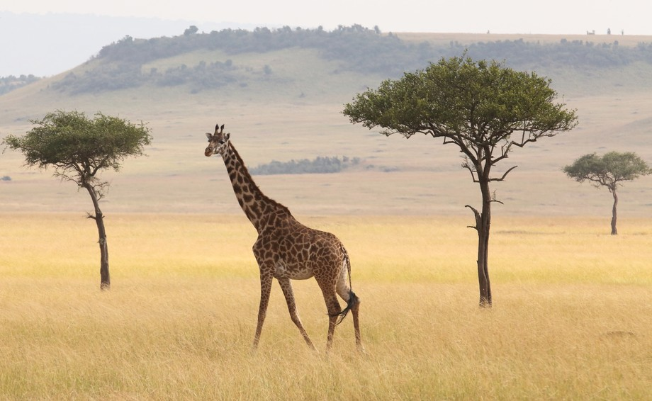 I clicked this image in Masai Mara. I was just looking around and suddenly saw this site and i wa...