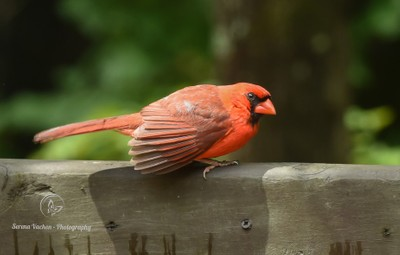 Cardinal Ready to Take Off