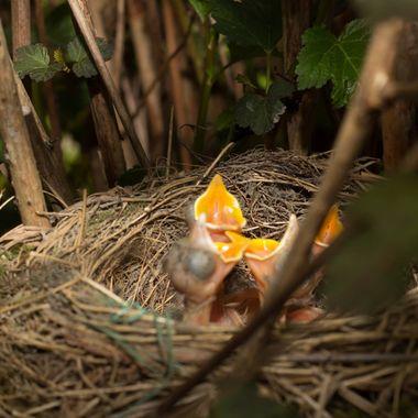 Nesting in my garden