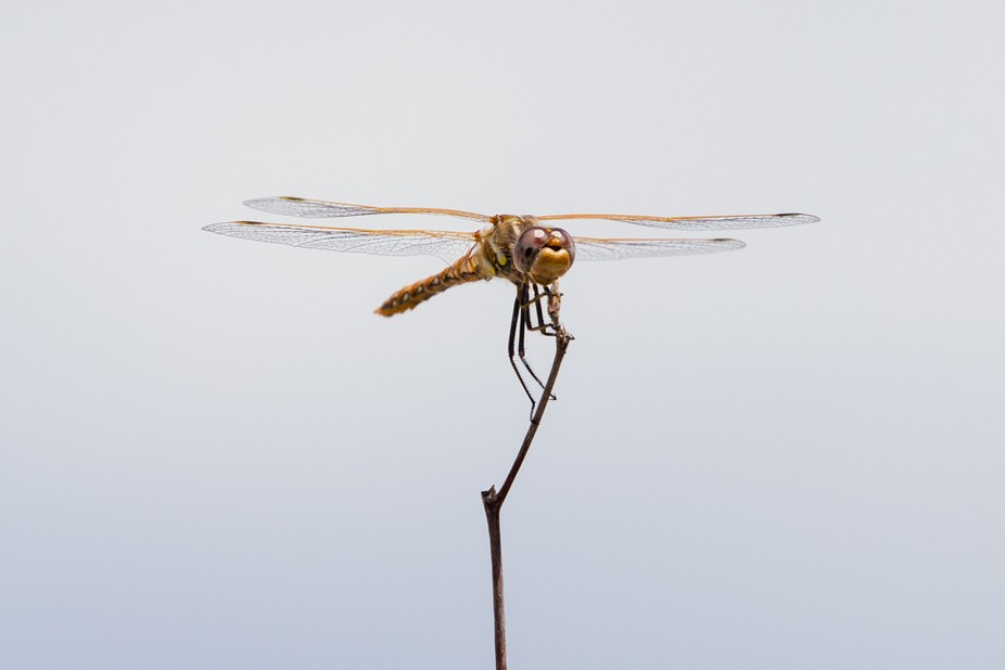 A dragonfly resting on a tree branch.
