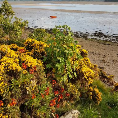 Summer colours at Findhorn Bay in Moray, Scotland