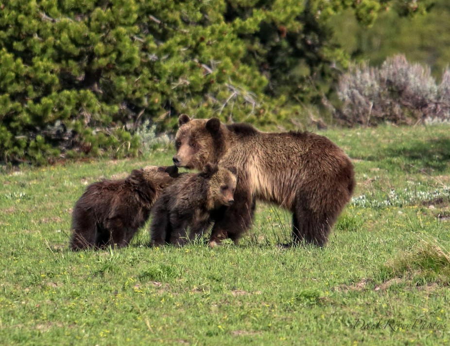Cubs Love Their Mom (1 of 1)