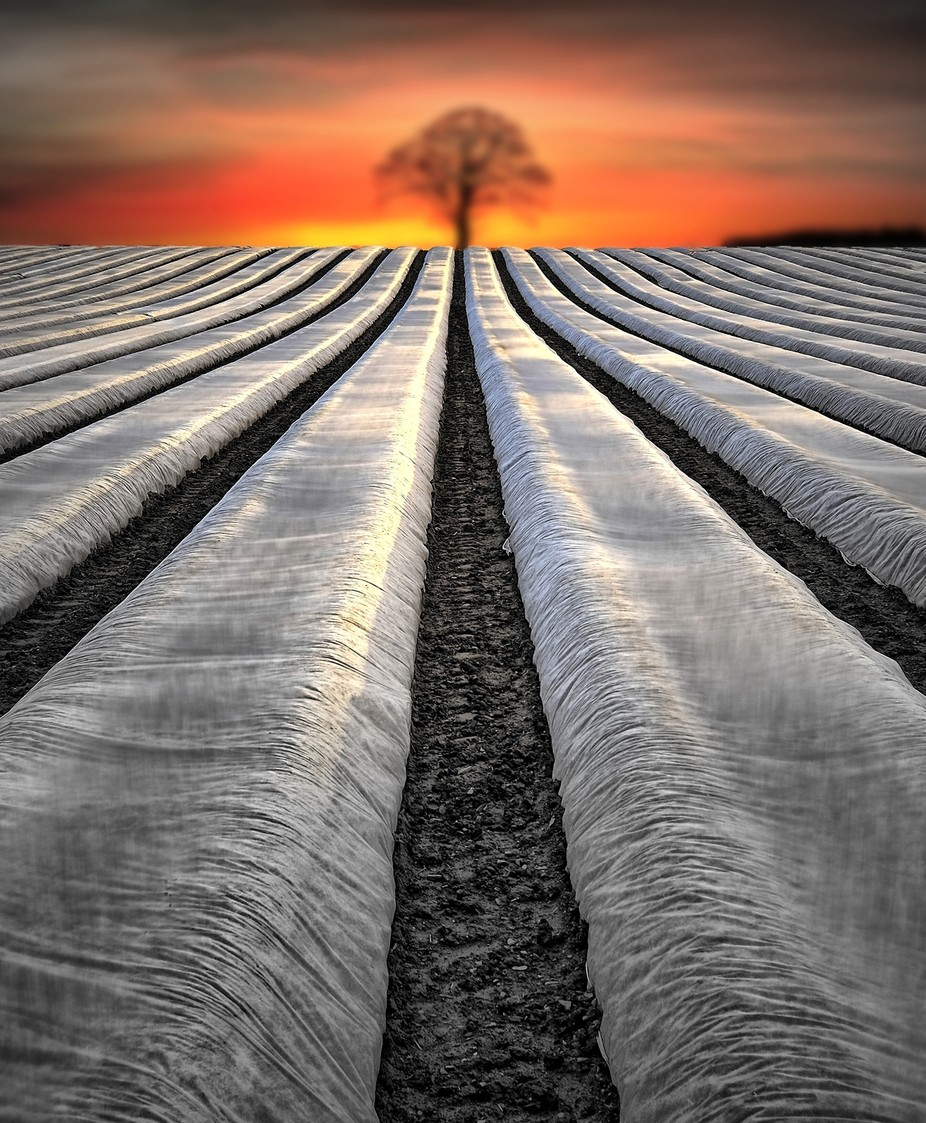 The Field by jackclarke - Creative Landscapes Photo Contest vol3