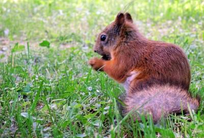 Just a Squirrel. The Lower Park. Peterhof. Saint Petersburg.