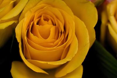 Summertime For Rose