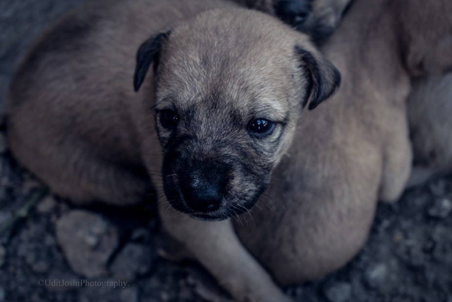 Puppy (1 of 1)
