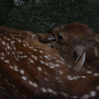Taken at the Vince Shutte Bear Sanctuary Orr, Minnesota Nikon D3400 18-55 lens