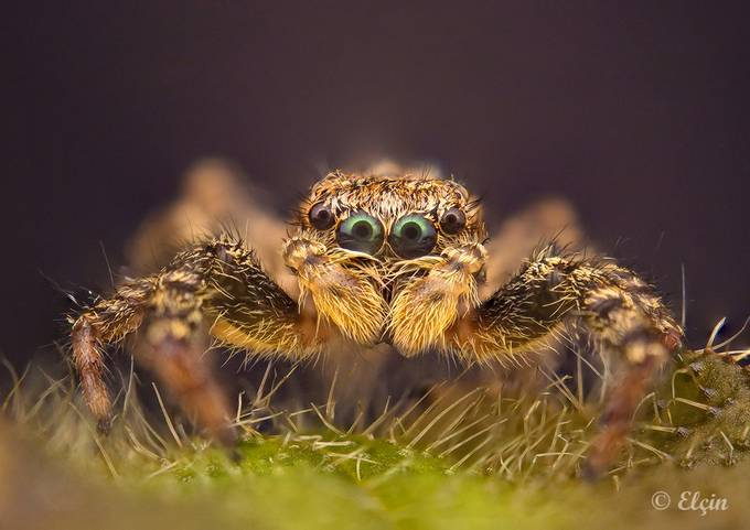 jumper by Elchin_Jabbarov - The Natural Planet Photo Contest